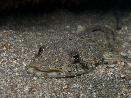 Рыба-крокодил (пятнистый плоскоголов). Бату Бесар, Нуса Дуа