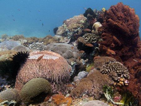 Коралловые сады. Мангров, Нуса Лембонган